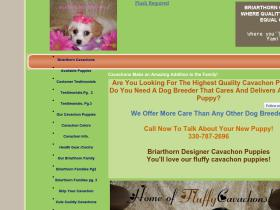 briarthorndesignerpuppies.com