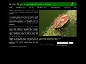 britishbugs.org.uk