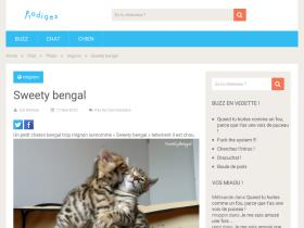 sweety-bengal.fr