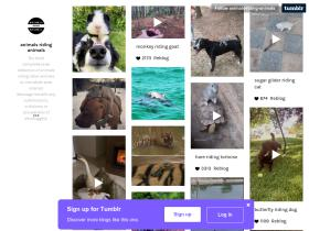 animals-riding-animals.tumblr.com