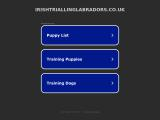 irishtriallinglabradors.co.uk