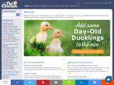 mypetchicken.com