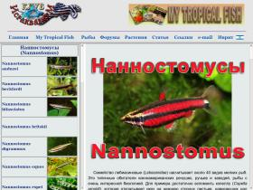 nannostomus.israquarium.co.il