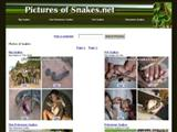 picturesofsnakes.net