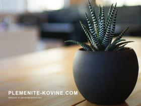 plemenite-kovine.com