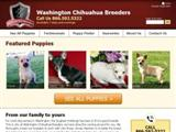 washingtonchihuahuabreeders.com